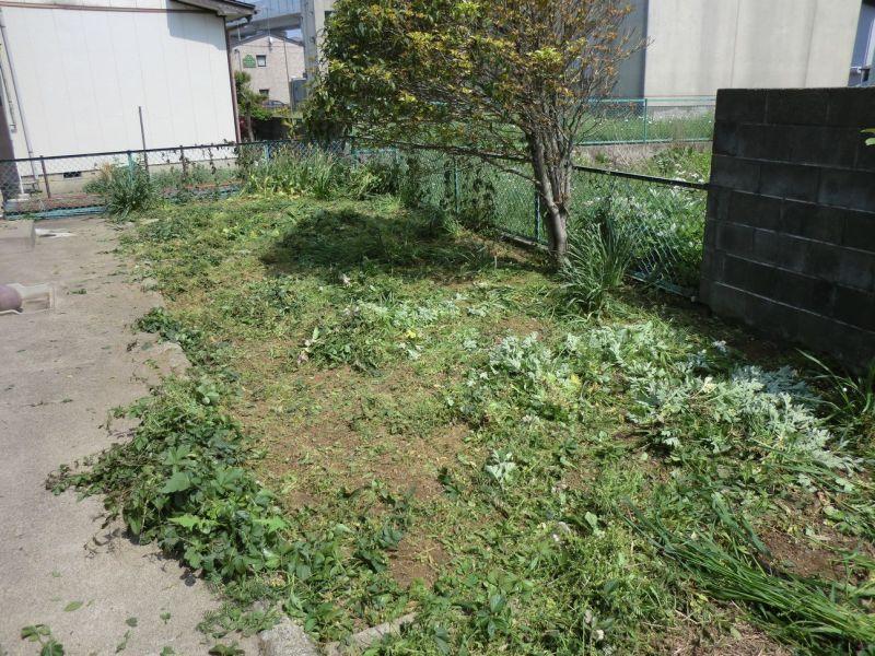 丁寧に草を刈ります