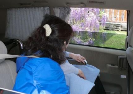 介護タクシーでお花見♪第2弾1