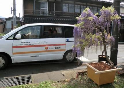 介護タクシーでお花見♪第2弾3