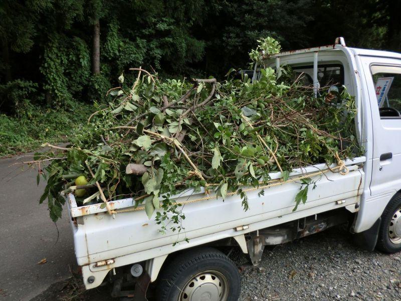 軽トラいっぱいに積まれた枝木